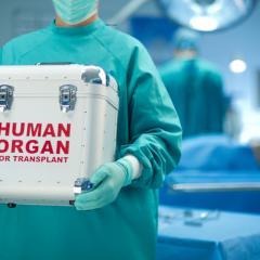organ transport box