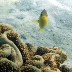 Reef fish help explain visual perception