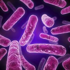 World health authorities estimate antimicrobial resistant superbugs will kill 10 million people a year by 2050.