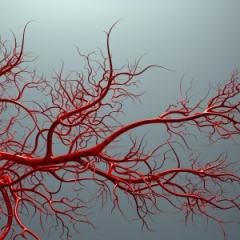 An animated vascular system. Photo: iStock