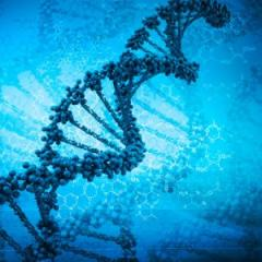 A UQ clinical trial will focus on the connection between diet and how genes are controlled. Source: iStock.