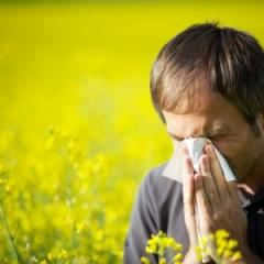 New hay fever blood test nothing to sneeze at