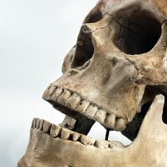 Professor Emma Duncan explains why bones are important.